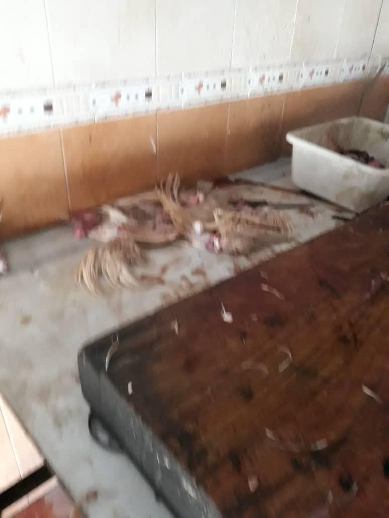 شاورما واللحم فاسد